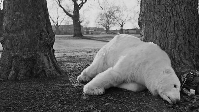 Trop Bon Trop Com - #TBTC Homeless Polar Bear