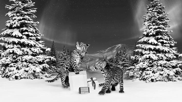 Trop Bon Trop Com - #TBTC Cartier : Un conte d'hiver