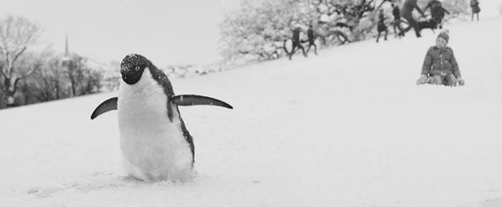 Trop Bon Trop Com - #TBTC John Lewis : Monty le Pingouin
