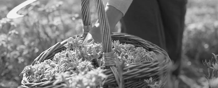 Trop Bon Trop Com - #TBTC Dior : Les Jardins Dior - La fleur Edelweiss