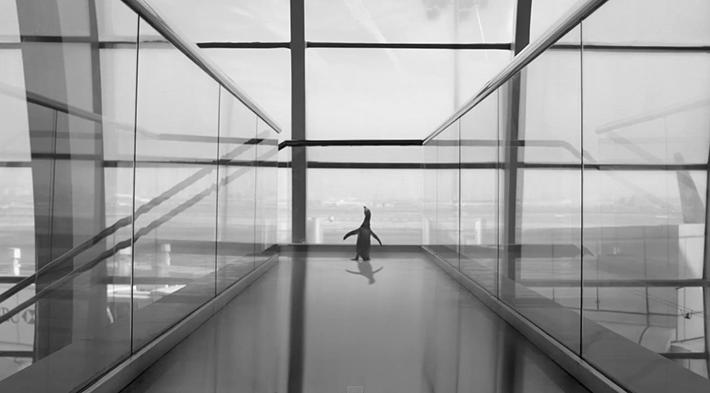 Trop Bon Trop Com - #TBTC Dubai Airports : Voler comme un Penguin
