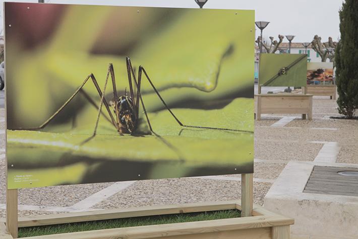 Le-Mois-De-L-Environnement-1-Avril-3-Mai-Ile-De-Ré-Je-Participe-Land-Art-Event-France-2015-Pub-Presse-Publicité-TBTC-G-Communication-08