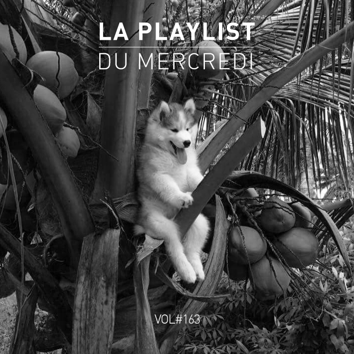Playlist 163 Chien Cocotier