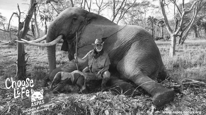 ASPAS Elephant